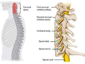 cervical spine national library of medicine pubmed health
